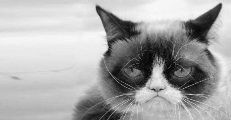 Grumpy Cat passed away